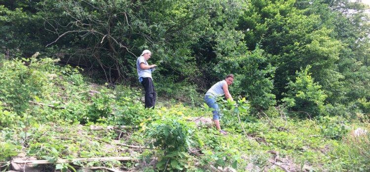 XX akcja sprzątania okolic zalewu Pilchowickiego